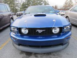 wild66cat 2007 Ford Mustang