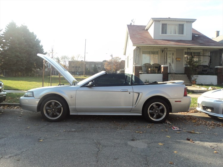 haider313 1999 Ford Mustang 18909073