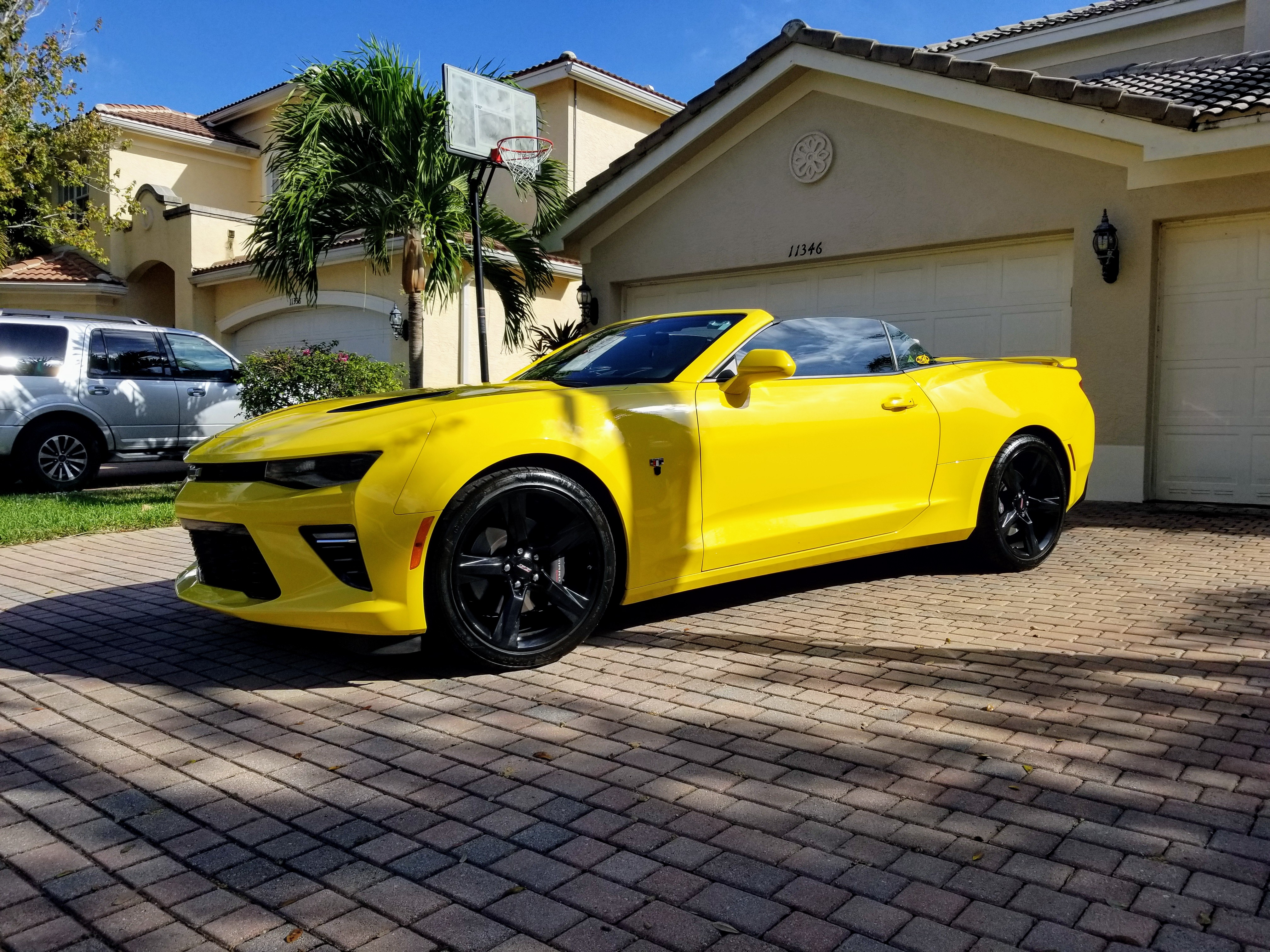 Bumblebee dropped her top  - 19197983