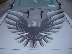 mulletlovers 1979 Pontiac Trans Am