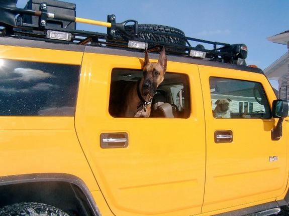 Another yellowh2 2003 Hummer H2 post... - 1327955