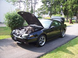 jas03ms 2003 Ford Mustang