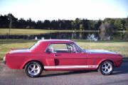 derryberry101 1966 Shelby GT350