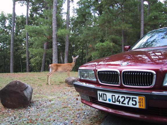 Another calypso750 1998 BMW 7 Series post... - 146861