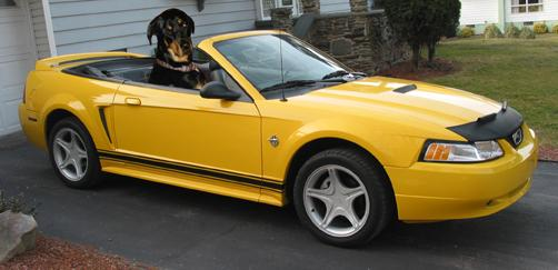 stangino  ford mustang specs  modification info  cardomain