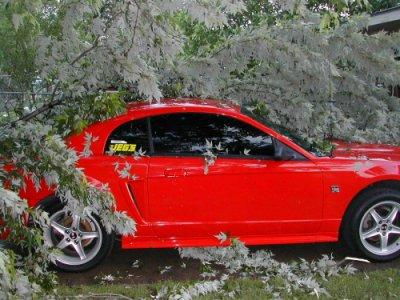 Another 2000stanggirl 2000 Ford Mustang post... - 347607