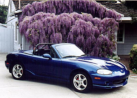 littleleon 1999 mazda miata mx 5 specs photos. Black Bedroom Furniture Sets. Home Design Ideas