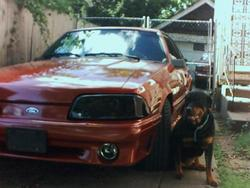 Another Triggerdak 1990 Ford Mustang post... - 551221