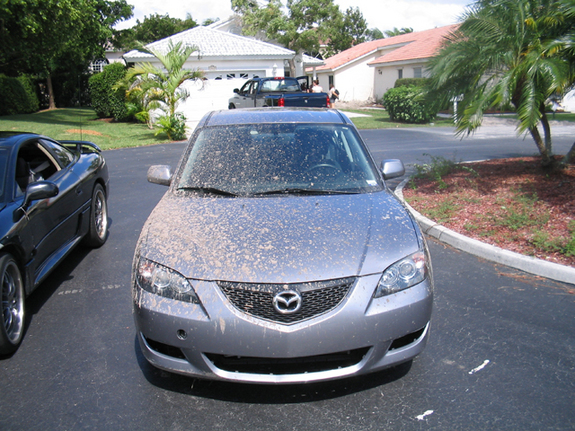 Another AndrewVR4_94 2005 Mazda MAZDA3 post... - 6975561