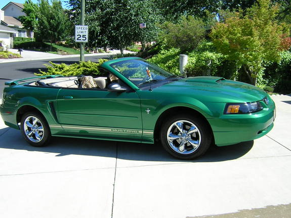 Catzeye113 2001 Ford Mustang Specs Photos Modification