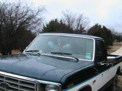 texancwbys 1985 Ford F150 Regular Cab