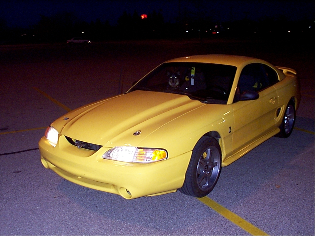 Yellow Mustang Gt: Lady
