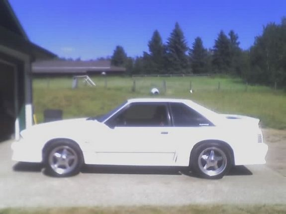 Another oxfordwhiteboy 1988 Ford Mustang post... - 8864524