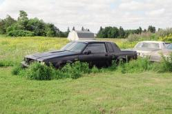 2456638 1984 Buick Grand National