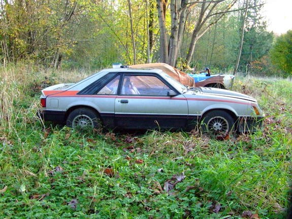 Another Greentree 1981 Ford Mustang post... - 10630467