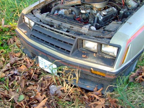 Another Greentree 1981 Ford Mustang post... - 10630471