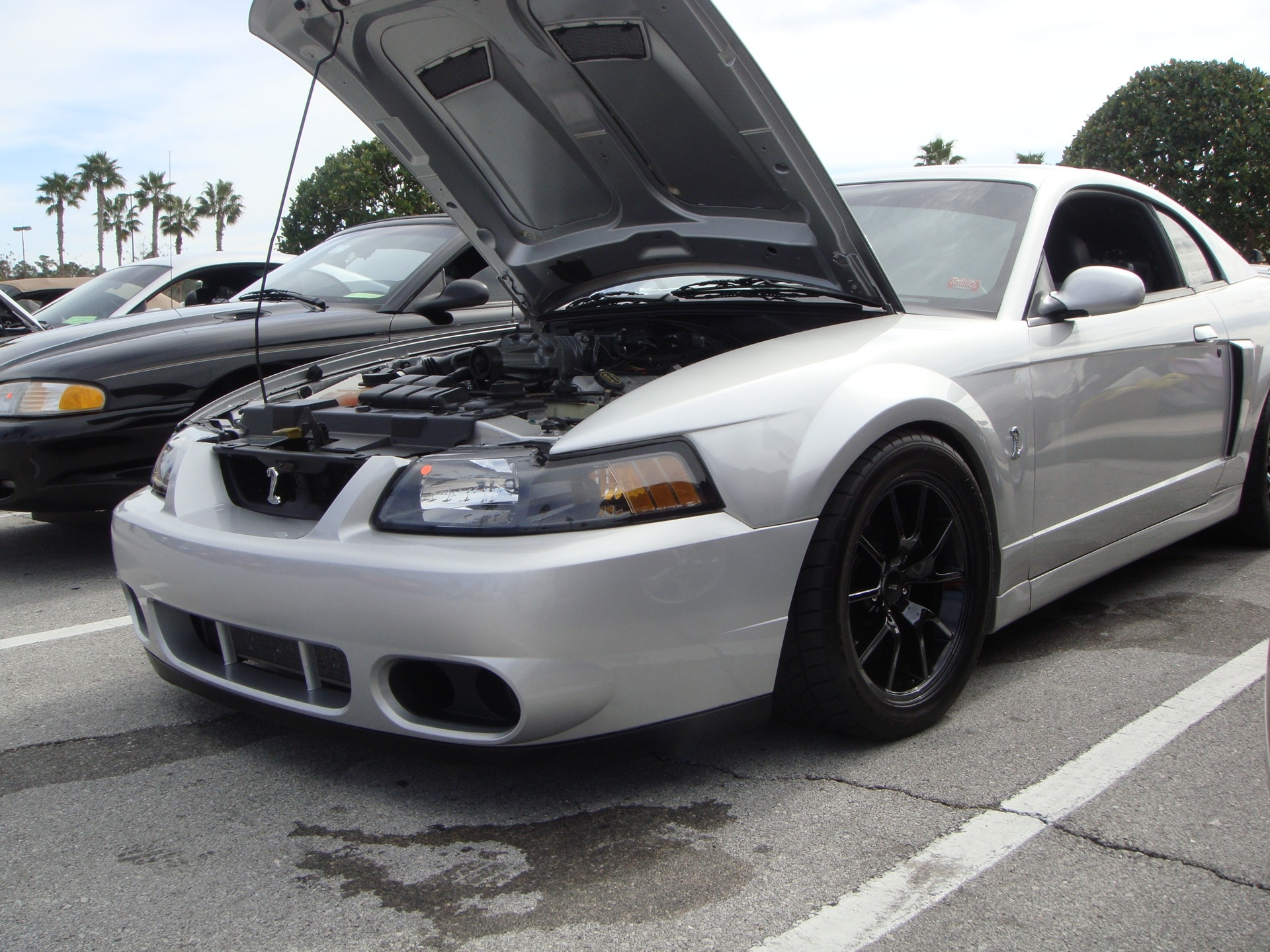 Another 06GTMustang 2006 Ford Mustang post... - 9383250