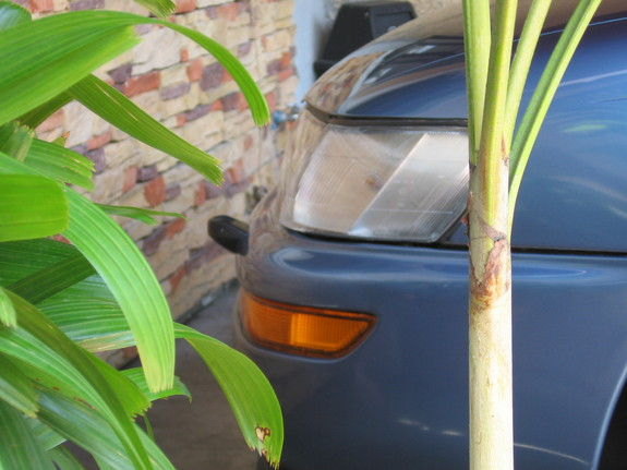 Another chieboy 1994 Toyota Corolla post... - 11365655