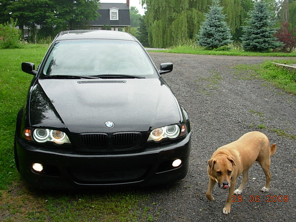 mr_hamann 2001 BMW 3 Series 12367513