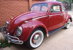 mamula-petas 1963 Volkswagen Beetle