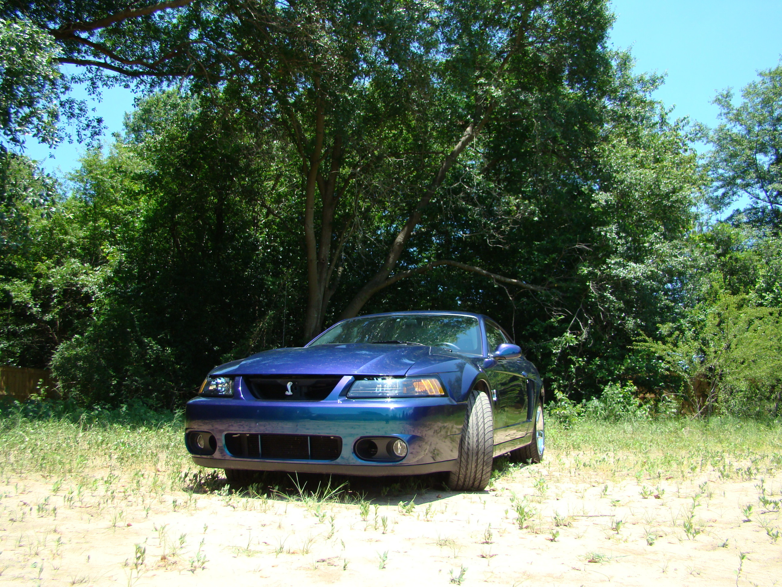 Another sevenleaf500 2004 Ford Mustang post... - 13043105