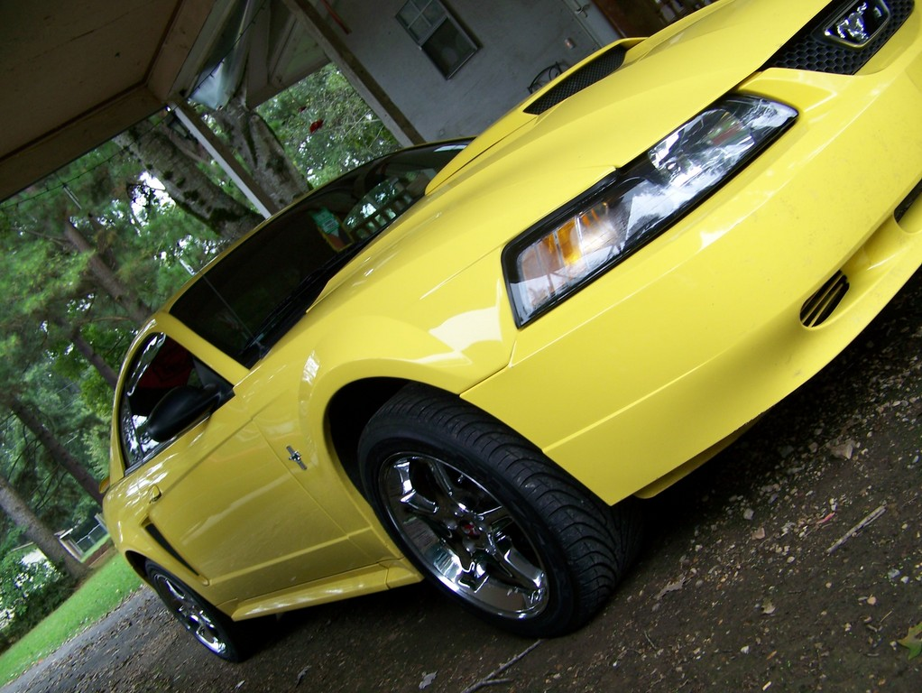Another MistyMay03 2003 Ford Mustang post... - 13770341