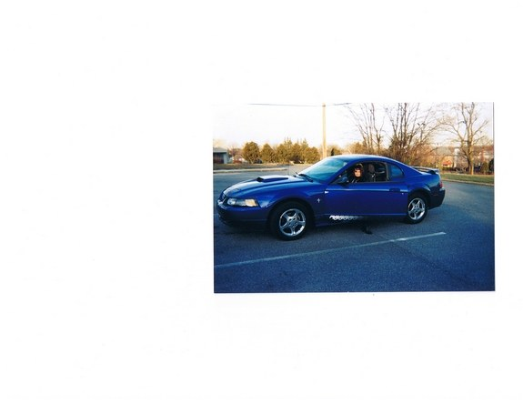 Another Stang-Girl_55564 2003 Ford Mustang post... - 9761807