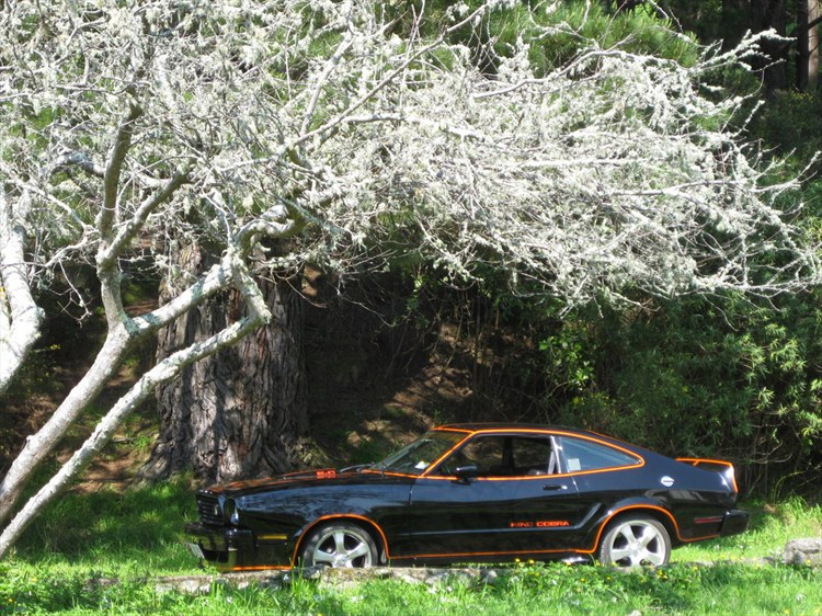 74MKII 1974 Ford Mustang II 9825612