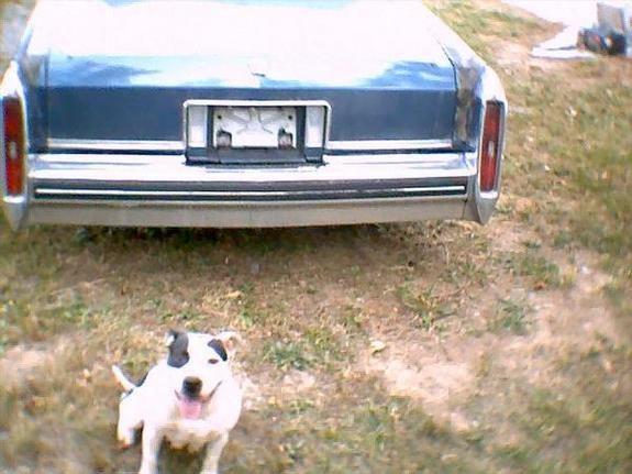 Another caddy77-80-95 1980 Cadillac DeVille post... - 9861724