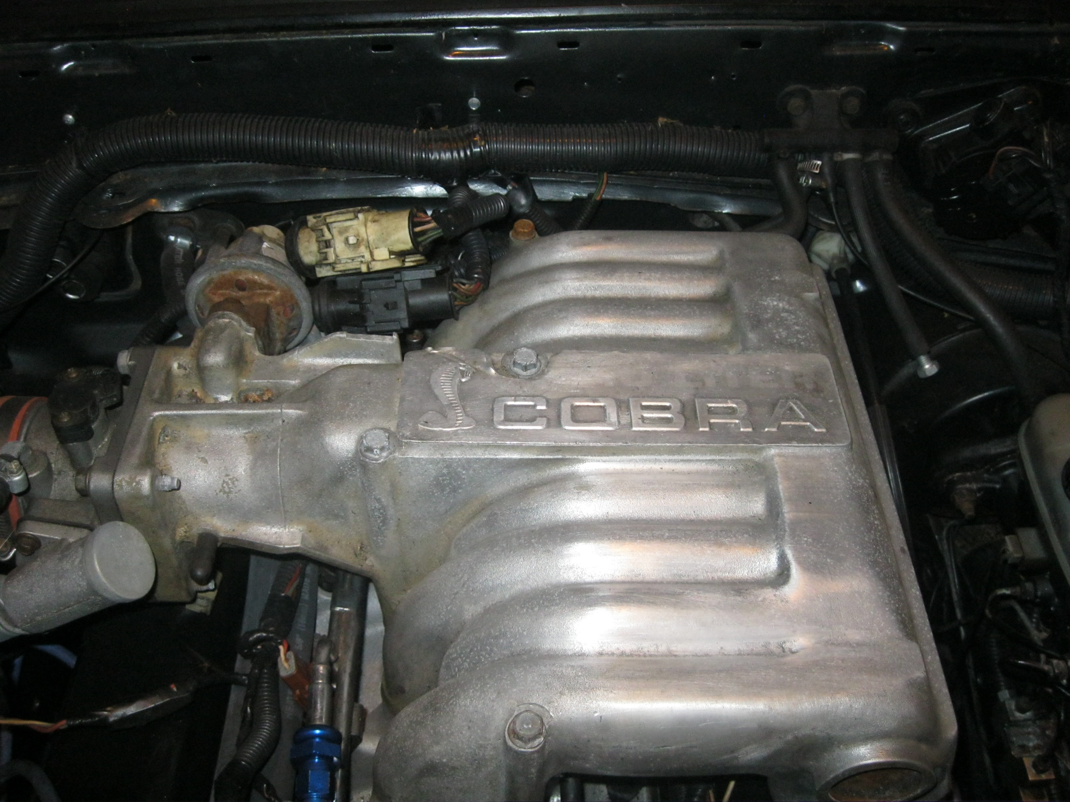 Another GI_colorado 1989 Ford Mustang post... - 14549080