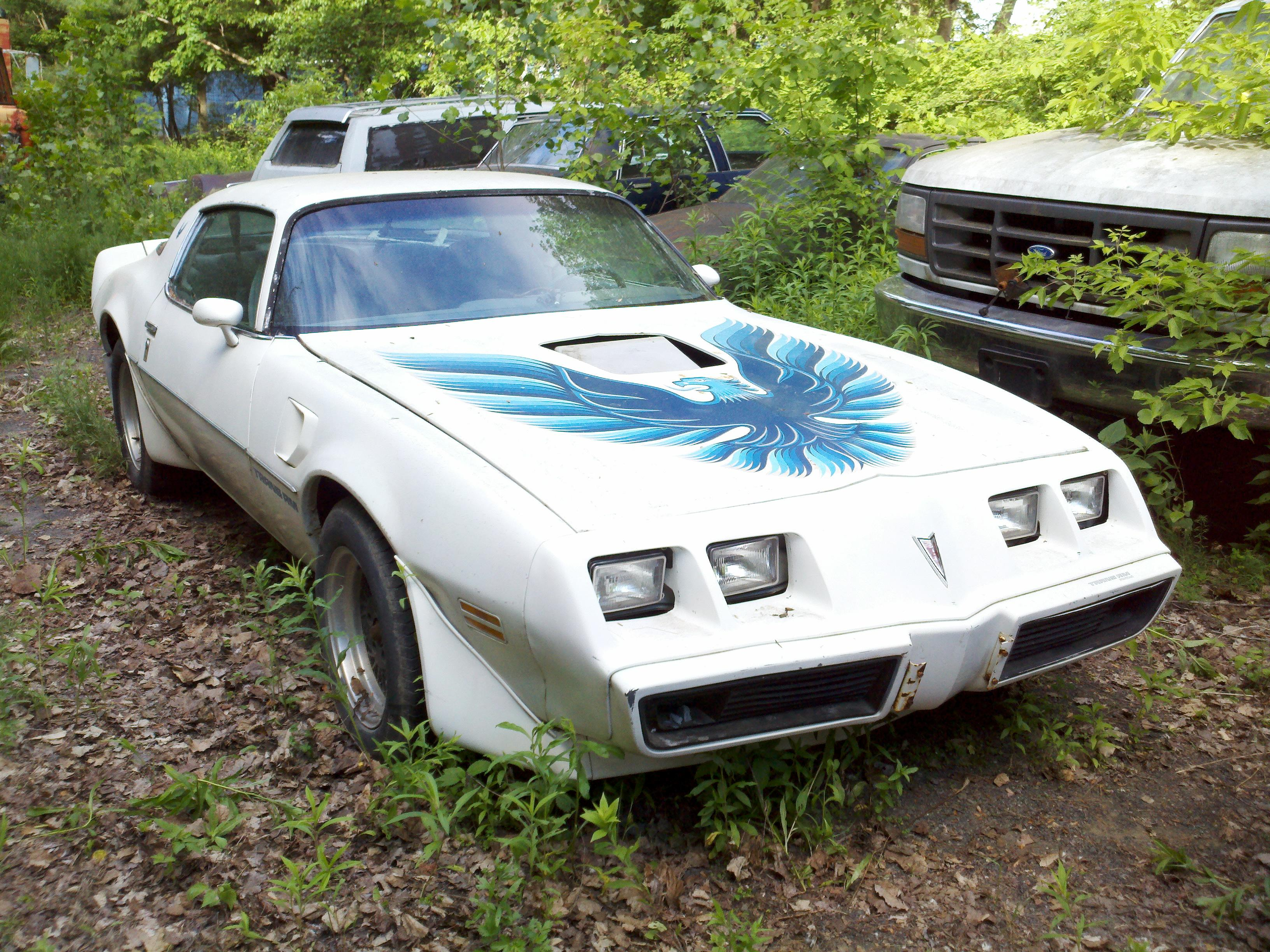 Another TransAmNut619 1979 Pontiac Trans Am post... - 15192256