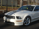 shelby07